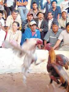 ¿Tradición, costumbre o maltrato animal?